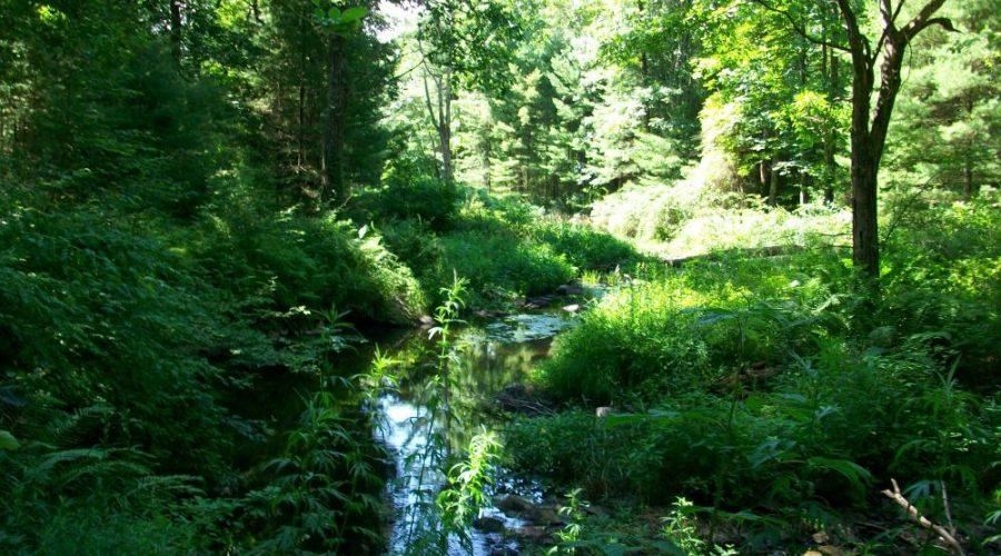 The Cornelia and Florence Bridge Preserve:  One Generous Man's Accessible Vision