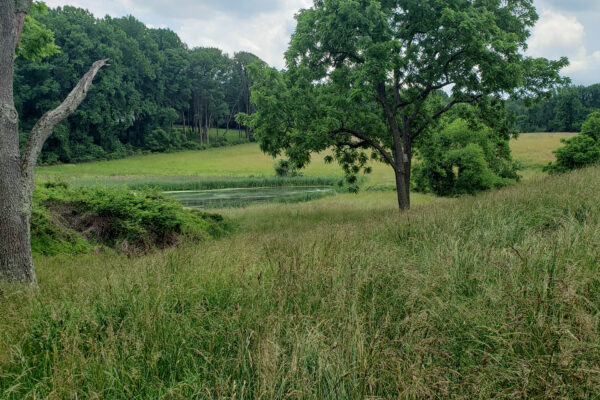 Brandywine Battlefield Property Purchased for Conservation